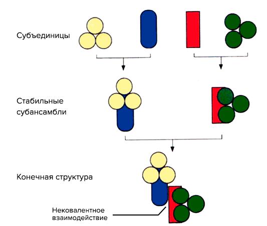 Нанотехнология пептиды вирусы анаболики medical group jnpsds