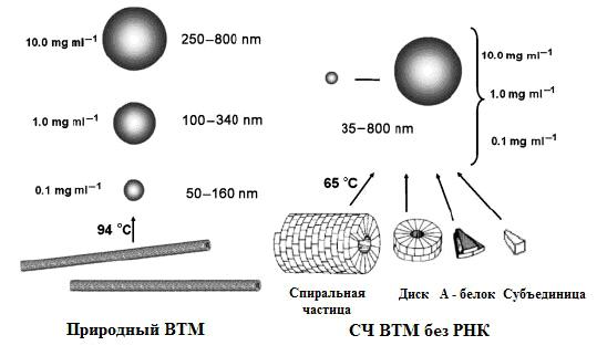 Схема синтеза СНЧ из нативного