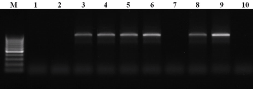 Идентификация грибов рода Pyrenophora