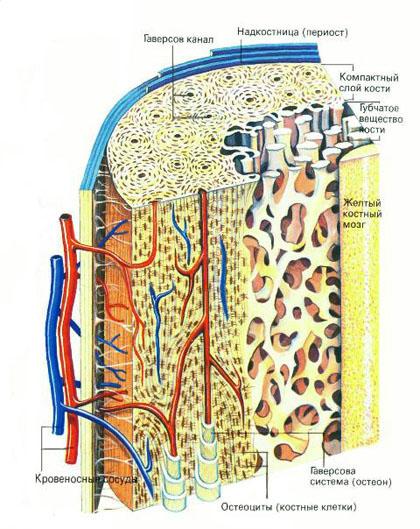 гідроксиапатит кальцію