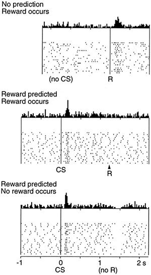 Выделение дофамина при получении и неполучении награды