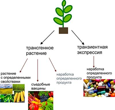 Возможности использования растений в биотехнологических целях