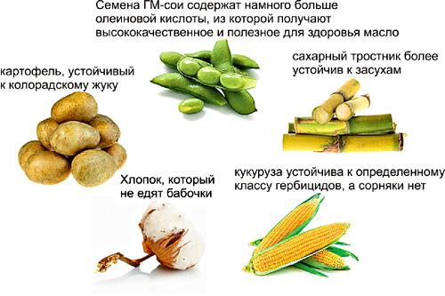 Примеры трансгенных растений