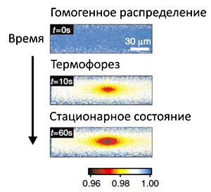 Изменение концентрации молекул при нагреве