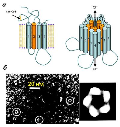 Ионотропный ГАМК-рецептор