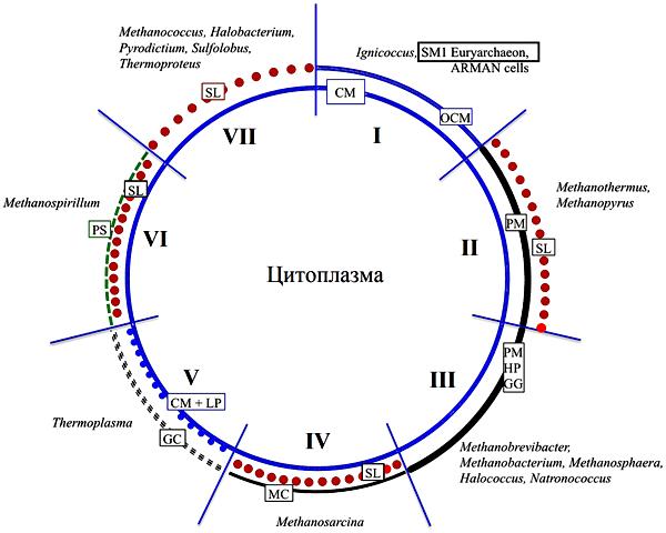 Варианты строения клеточной