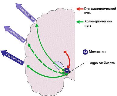 Действие мемантина при альцгеймеровской деменции