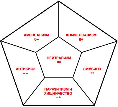 Межвидовые взаимодействия таблица примеры