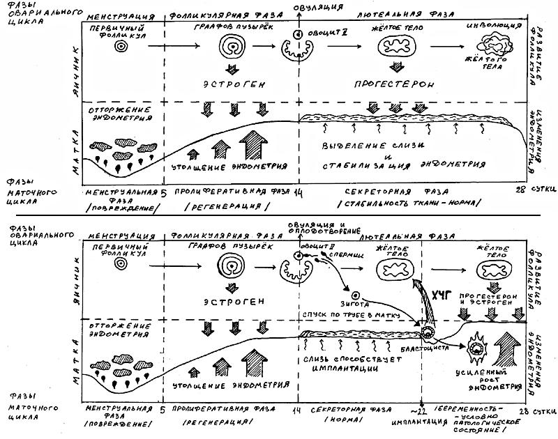 Схемы функциональной