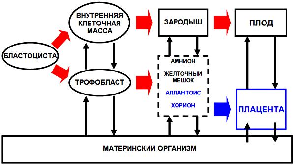 Рисунок 13. Схема формирования