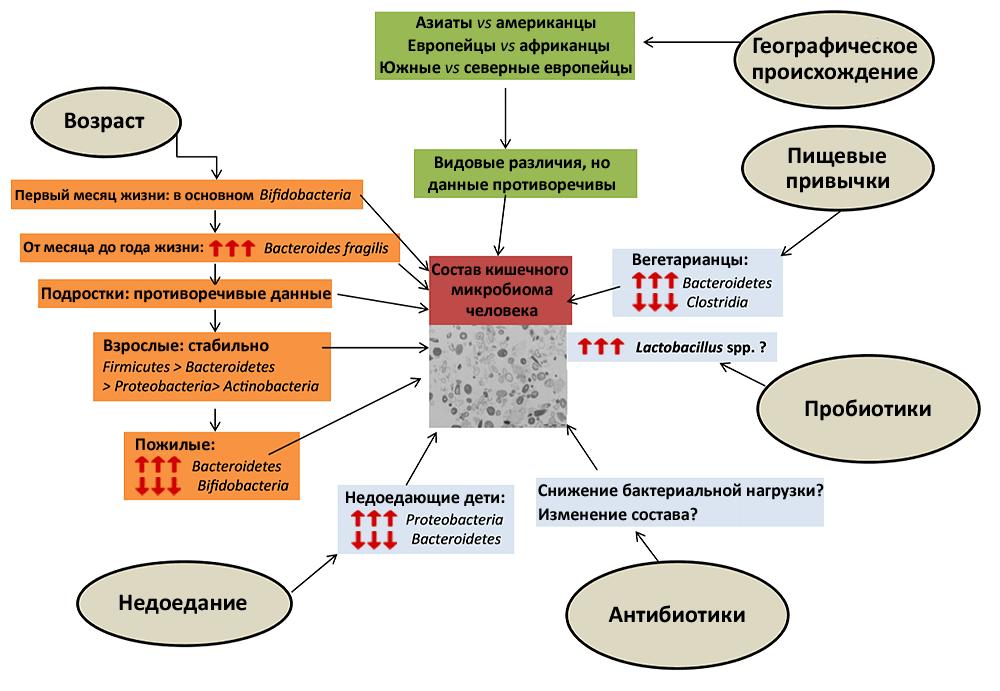 Внешние факторы и микрофлора