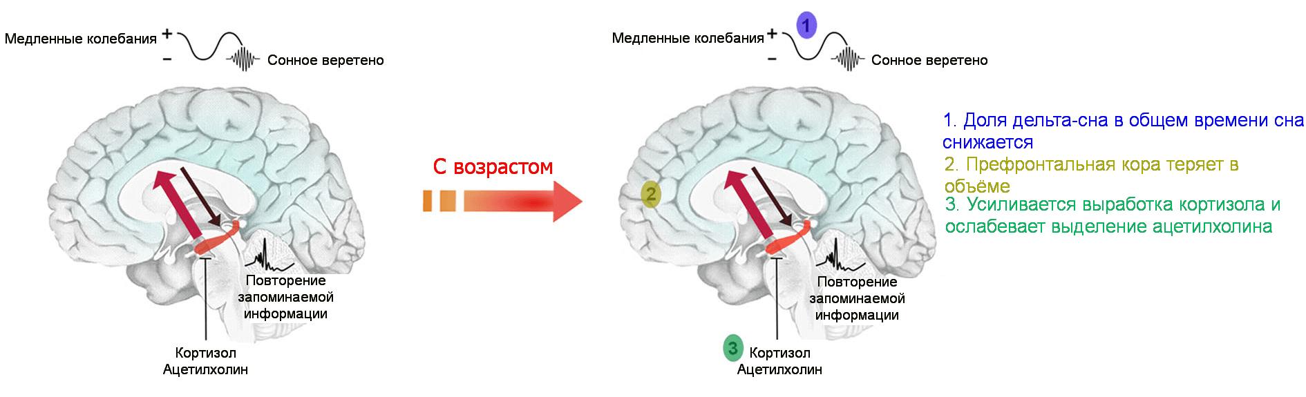 tabletki-dlya-sna-melatonin