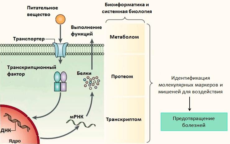 Нутригеномные методы исследования