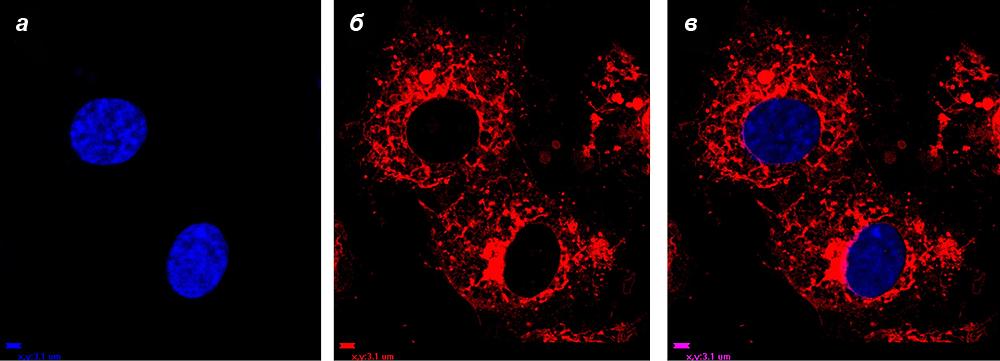 Окрашенные клетки