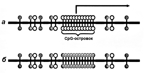 CpG-островок промоторной области гена