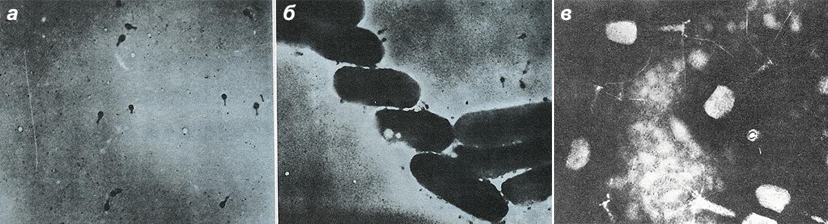 Бактериофаг Т2