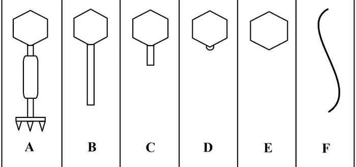 Фаговые морфогруппы по Бредли