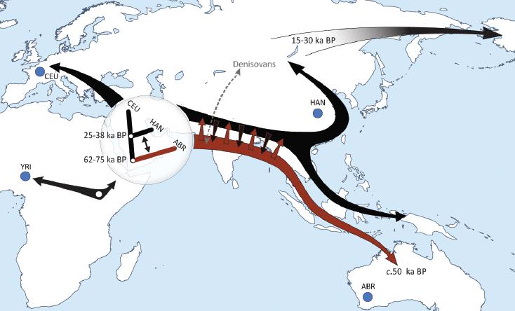 Реконструкция маршрута ранних миграций основных групп человечества