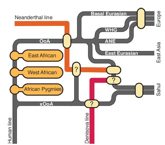 Уточненная схема выхода человека из Африки