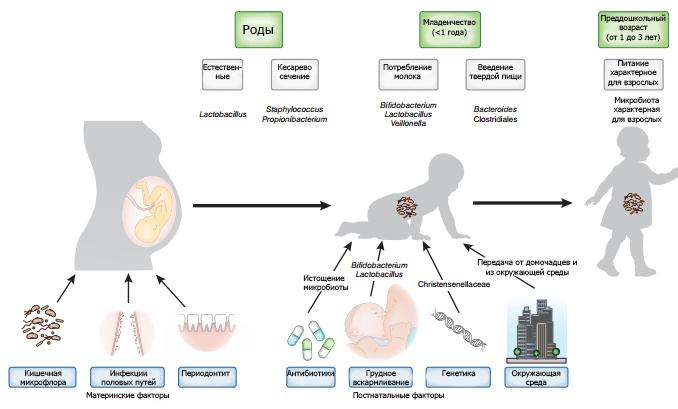Факторы, обеспечивающие формирование микробиома младенца