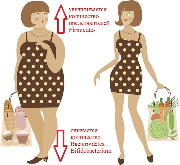 Состав микрофлоры кишечника тучного человека
