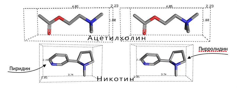 Никотин и ацетилхолин