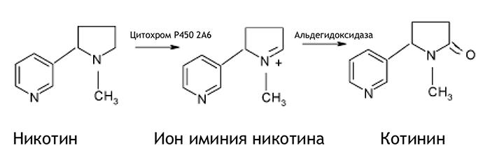 Метаболизм никотина