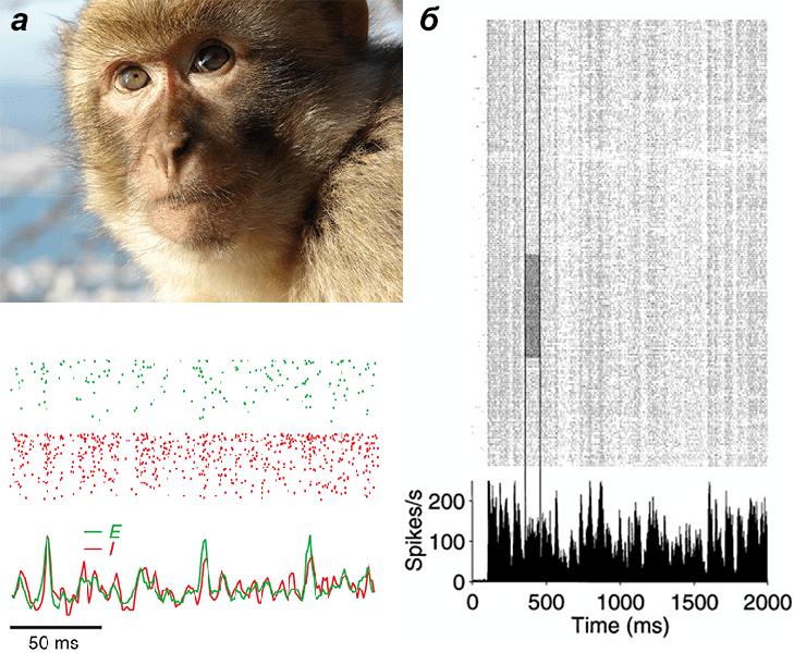 Активность нейронов зрительной коры макаки