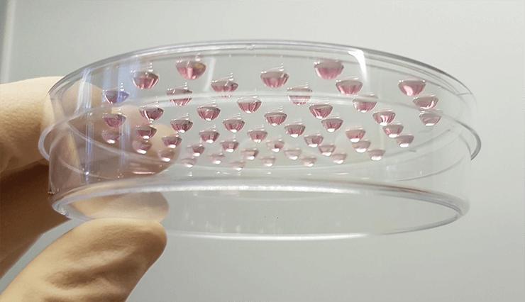 Стимуляция формирования эмбриоидных телец