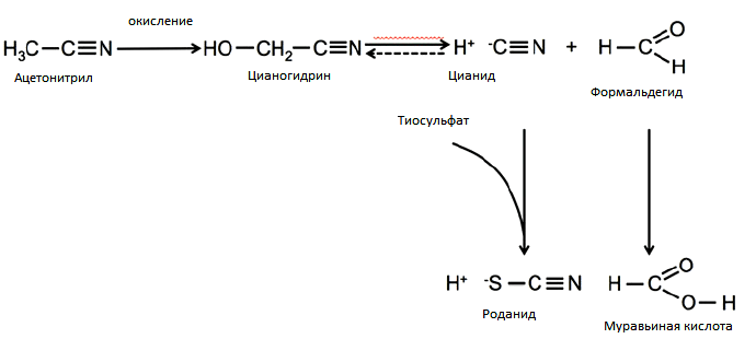 Метаболизм ацетонитрила