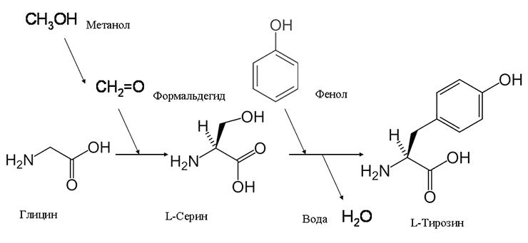 Включение формальдегида и фенола в состав аминокислот