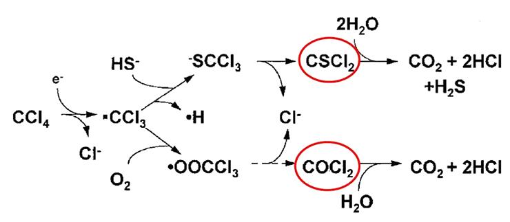 Аэробная биодеградация четыреххлористого углерода