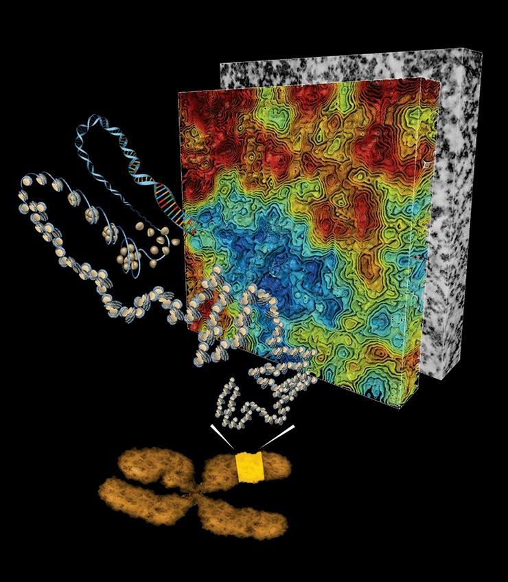 Ультраструктура хроматина
