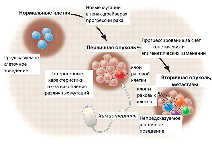 Злокачественная трансформация и прогрессирование рака
