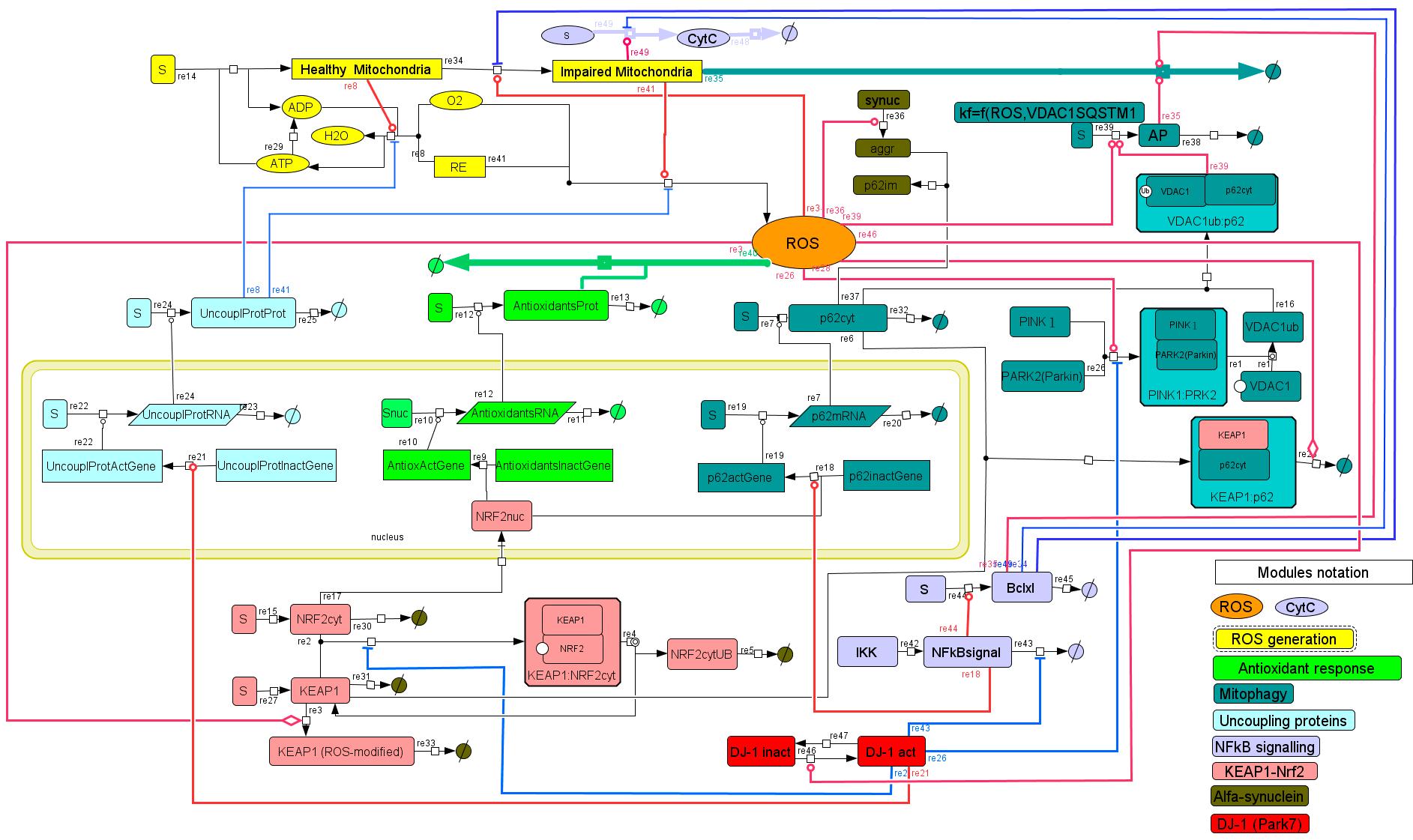 Схема регуляции АФК в клетке, включающая АТФ и ядро