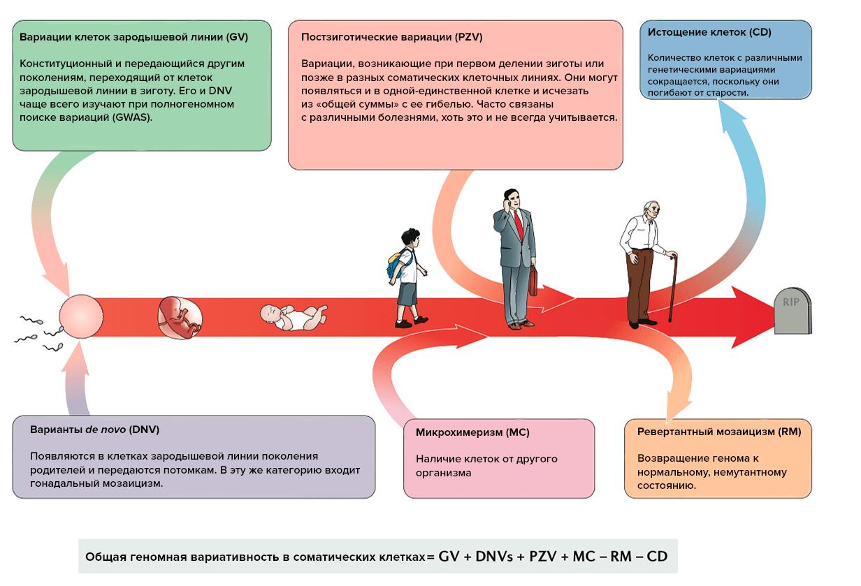 Генетические вариации в организме человека