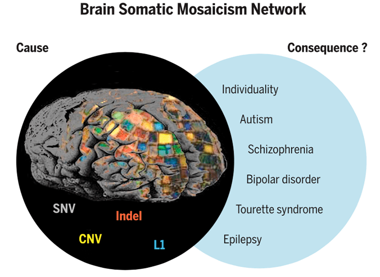 Конечный геном одного нейрона
