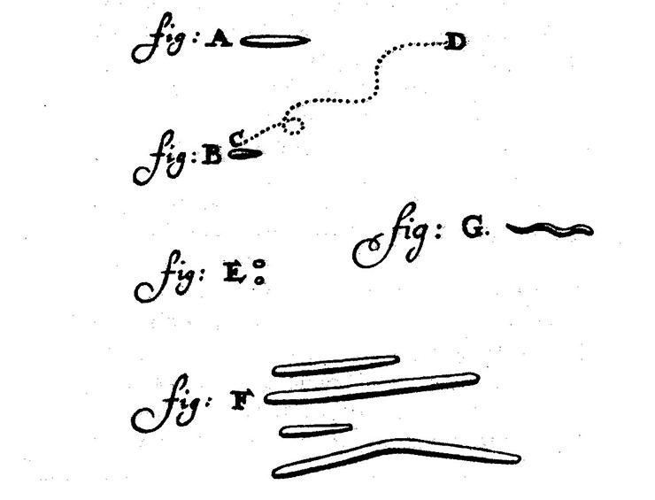 Зарисовка микробов Антони ван Левенгуком