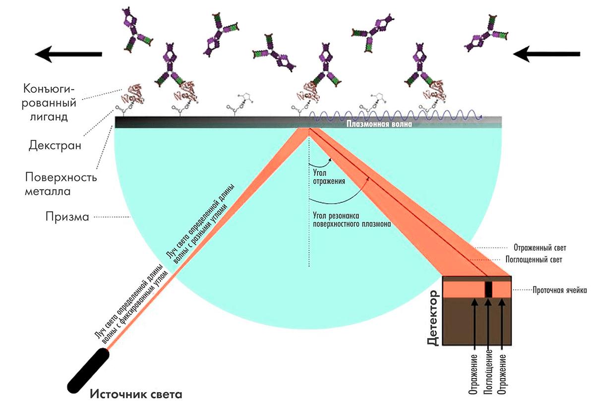 Схема работы прибора на принципе поверхностного плазмонного резонанса
