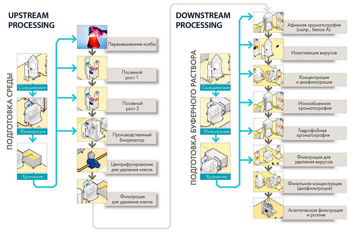 Производство антител
