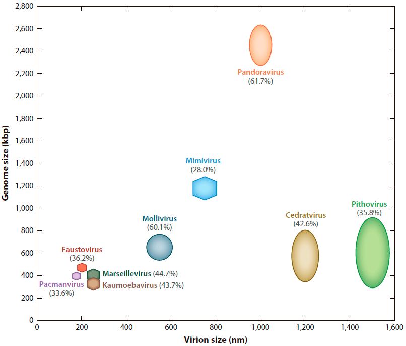 Распределение размеров вирионов и геномов некоторых гигантских вирусов