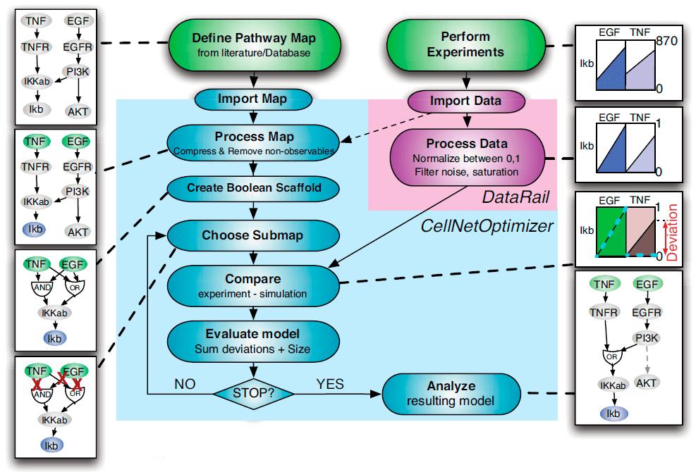 Основные этапы построения логической модели клеточного сигналинга