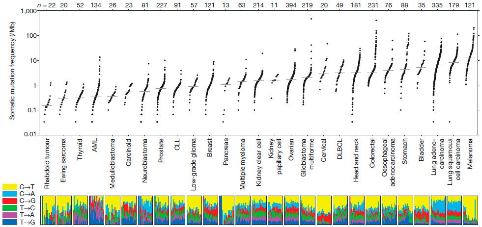 Количество мутаций в различных типах опухолей