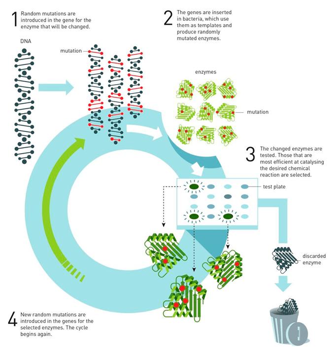 Метод направленной эволюции ферментов