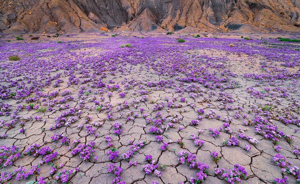 Чилийская пустыня после дождя
