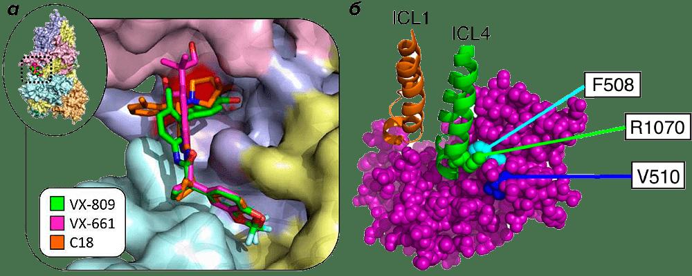Трехмерная модель связывания корректоров CFTR