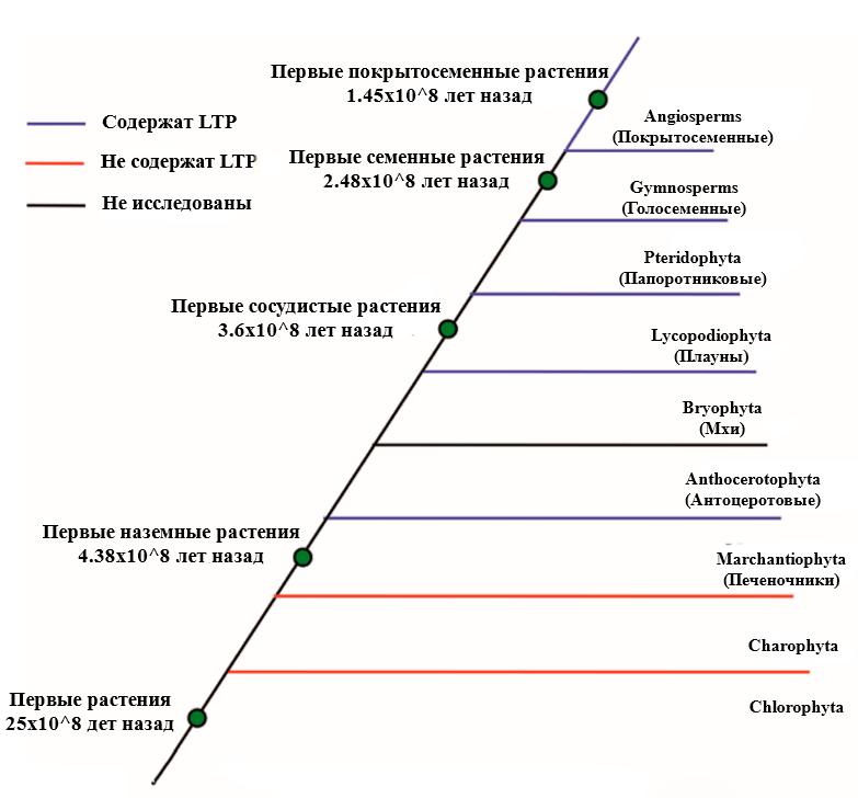 Филогенетическое древо растений с LTP