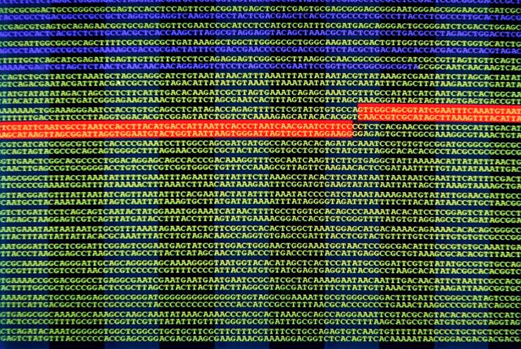 Последовательность ДНК