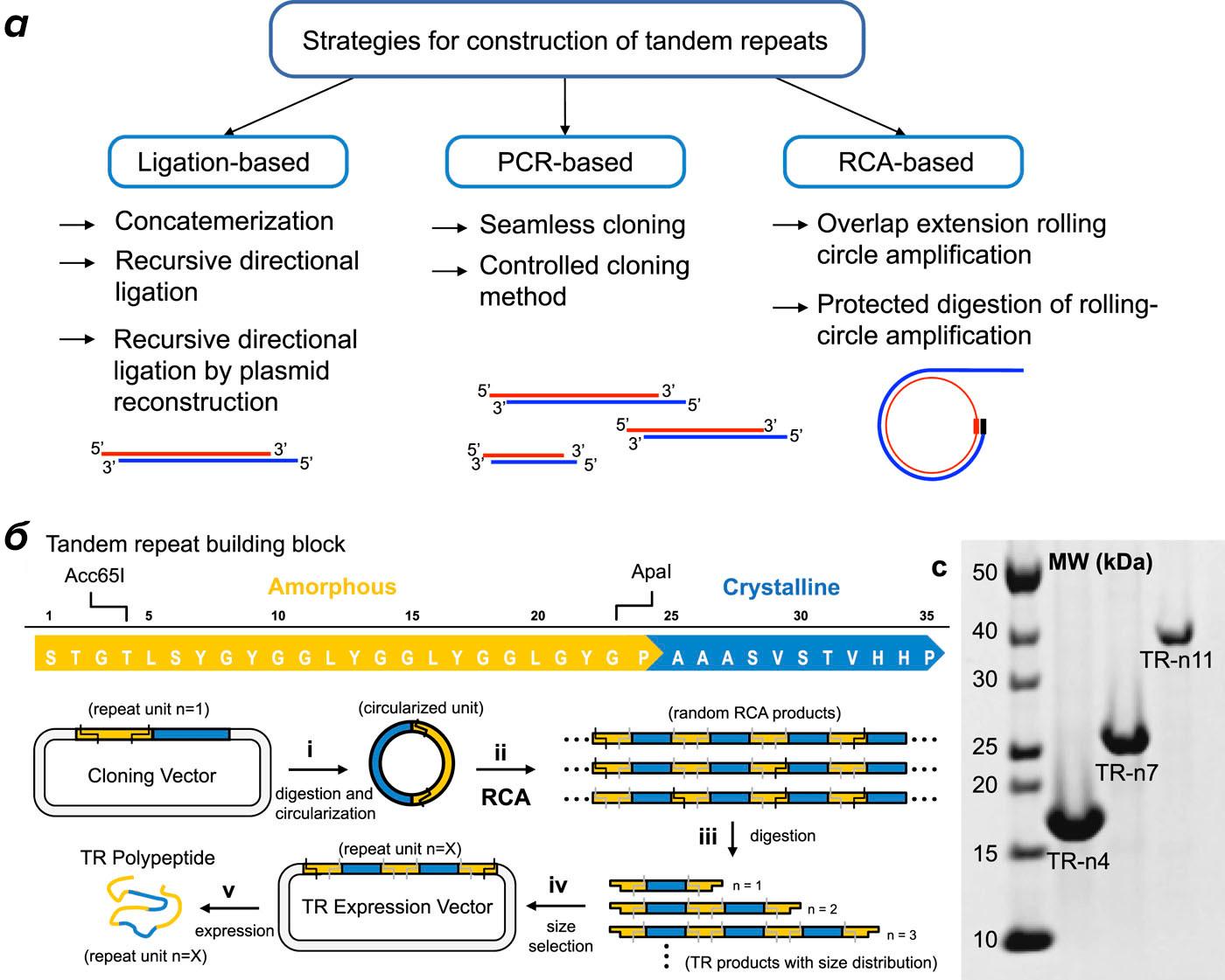 Дизайн белков с тандемными повторами