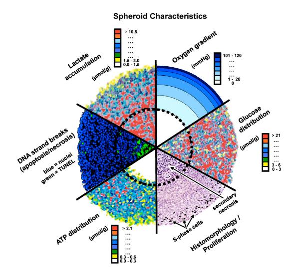 Основные молекулярно-биологические характеристики сфероидов